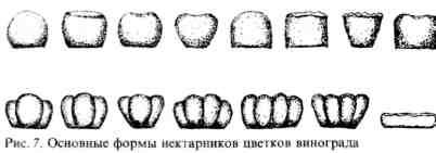 формы нектарников
