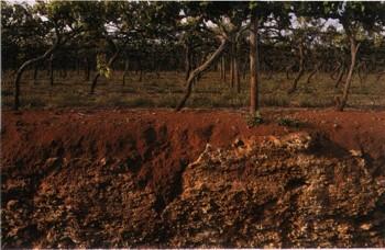 виноградник Кунаворра